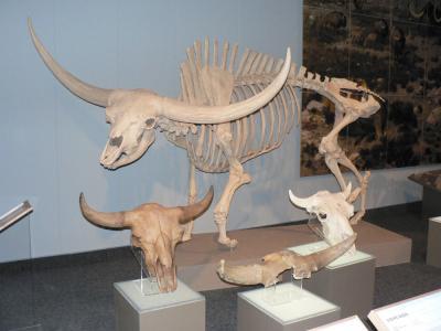 Orjaški bizon