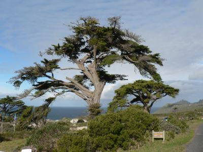 Slikovito drevo