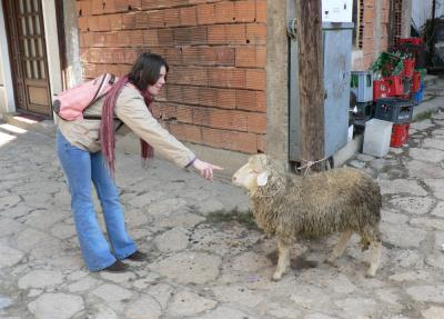 Ovca na ulici