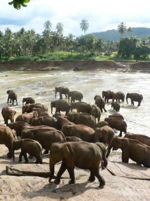 Sloni pri kopeli