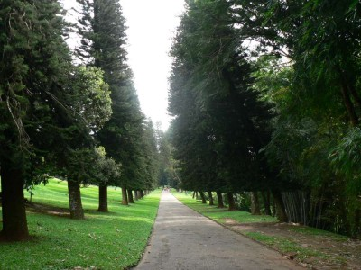 Postrani drevesa