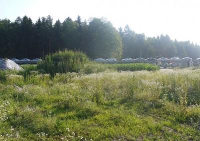 Tale goščava je naša parcela, za njo sem pa celo ujel vlak